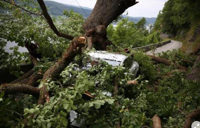 Chute d'un arbre: La solidité et la sécurité de la Tesla S!